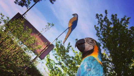 Vogelopvangcentrum Breda